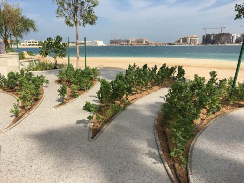 Resin Bound Permeable Paving on Beach | Private Villa Palm Jumeirah | Making Ground Resin Flooring in Dubai